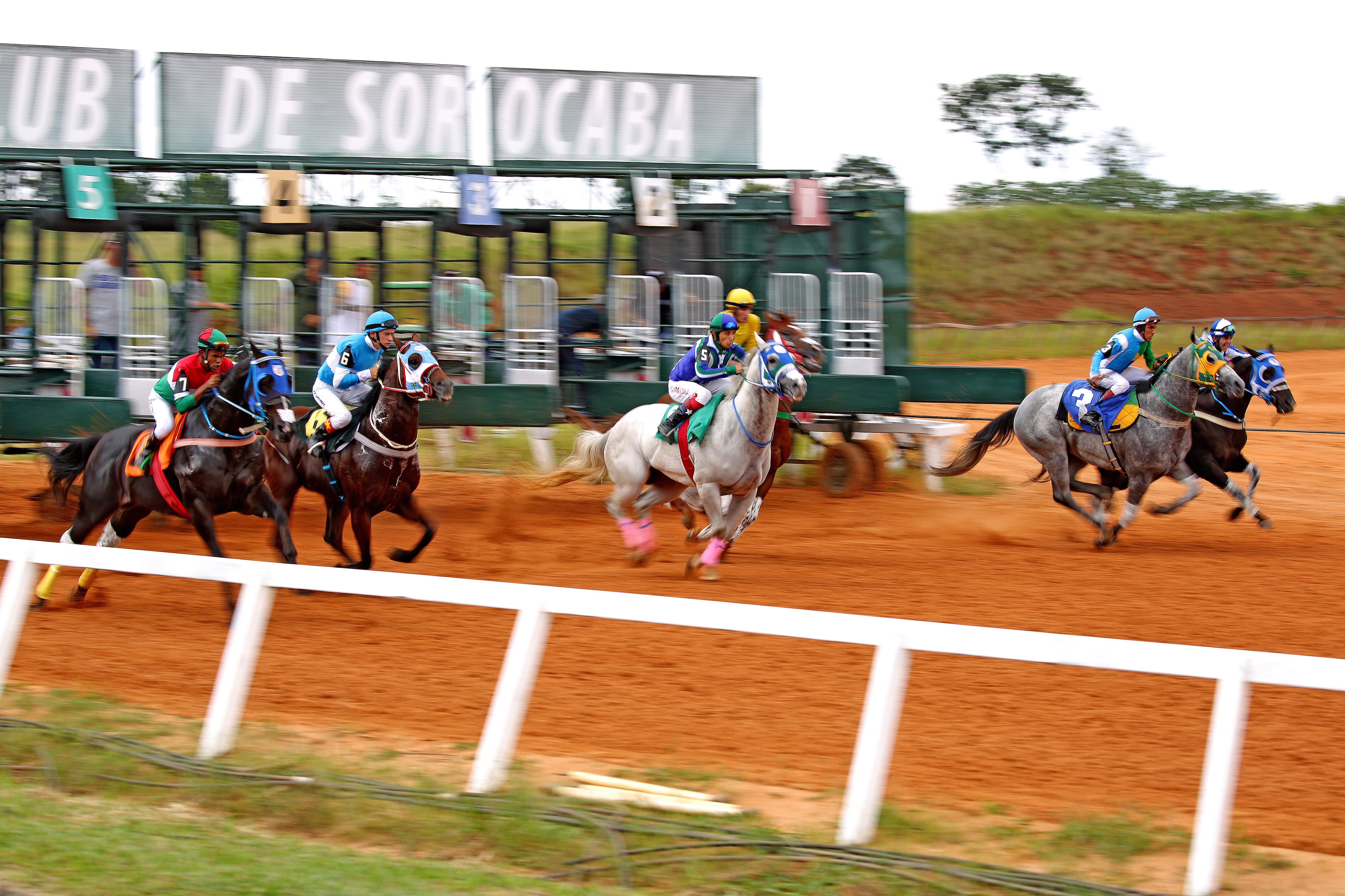Palestra Quarter Horse Clean Sport – o Bem-Estar Animal